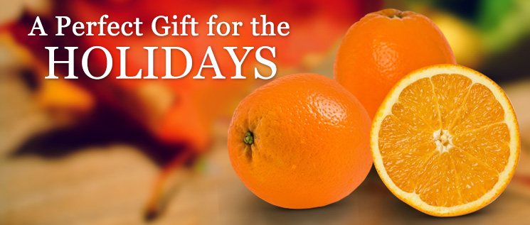 Florida Oranges Now Shipping Delivered Fresh for the holidays. Don't forget to check out our free shipping specials.