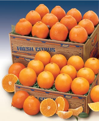 Navel Oranges and Honeybell Orange Tangelos