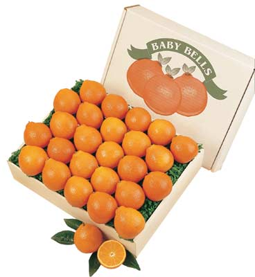 Baby Honeybells, Baby Temples and Baby Tangerines