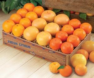 Bonus Box of Florida Oranges, Tangelos and Grapefruit.