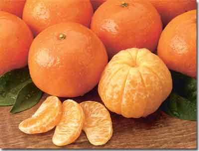 Florida Tangerines, sweet and easy to peel