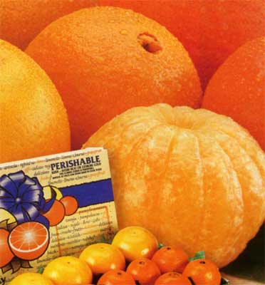 Florida Navel Oranges included in Gift Baskets