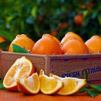 Florida Fruit - Honeybells