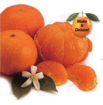 Florida Honey Tangerines