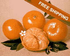 Florida Honey Tangerines With Free Shipping