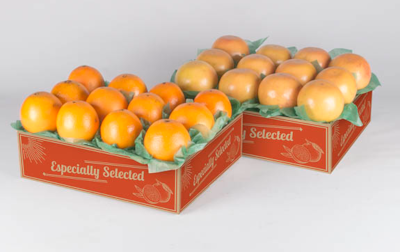 Our Popular 2-tray pack of Navel Oranges and Ruby Red Grapefruit