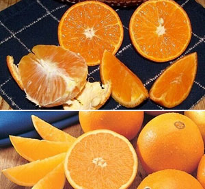 Juicy, flavorful and rare Page Oranges and popular, seedless Navel Oranges.