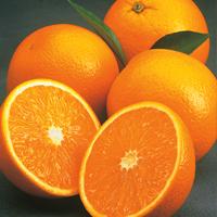 Oranges from Florida