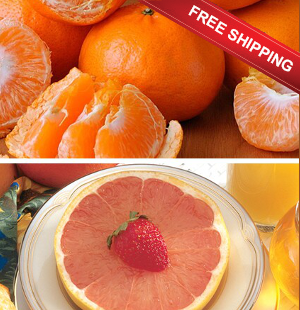 Orlando Tangelos and Ruby Red Grapefruit