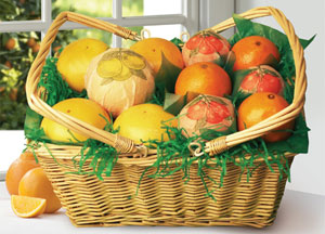 Woven picnic basket packed with Florida Oranges, Tangerines and Grapefruit.