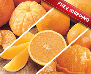 Premium selection of Tangerines, Navel Oranges and Orlando Tangelos