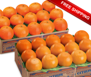 Free Shipping Special Temple Orange and Honey Tangerine Combo.